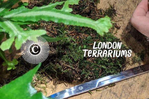 London Terrariums Moss Workshop at The Culpeper