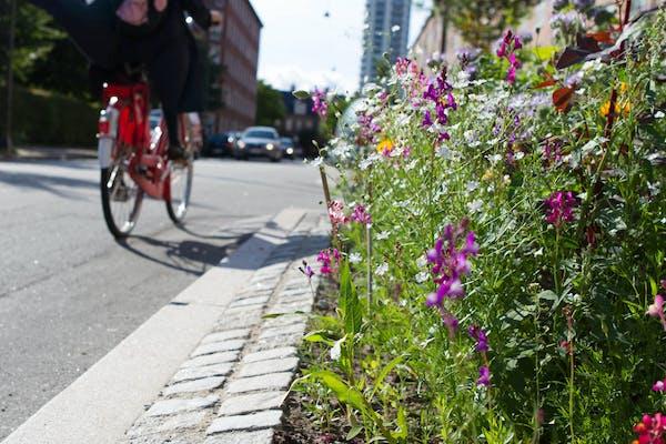Foredrag: Skab grønne mødesteder i gaden og ved facaden