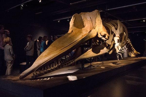 Særrundvisninger på Zoologisk Museum - Grønlandsk Fisker- og fangerdag