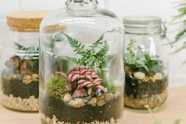 NEW VENUE - Build your own Demijohn Terrarium at Unwined Waterloo
